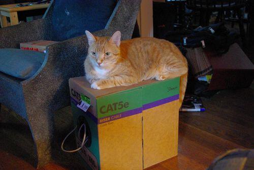 Cat5 pic 2